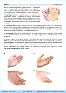 Turkceci