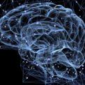 Nöro-Biyolojik Yaklaşım