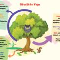 Türkçe 5. Sınıf Kavram Haritaları